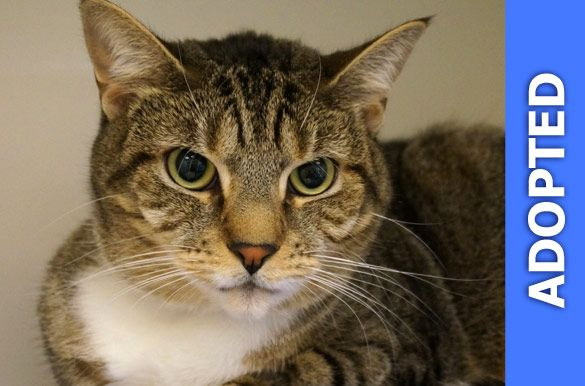 Laciann was adopted!