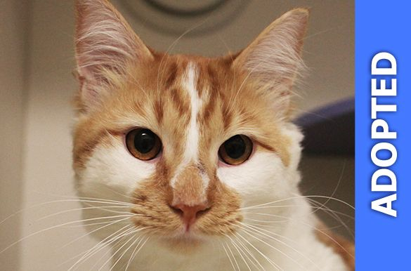 Lancelot was adopted!