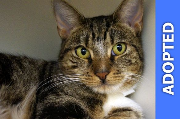 Leopold  was adopted!