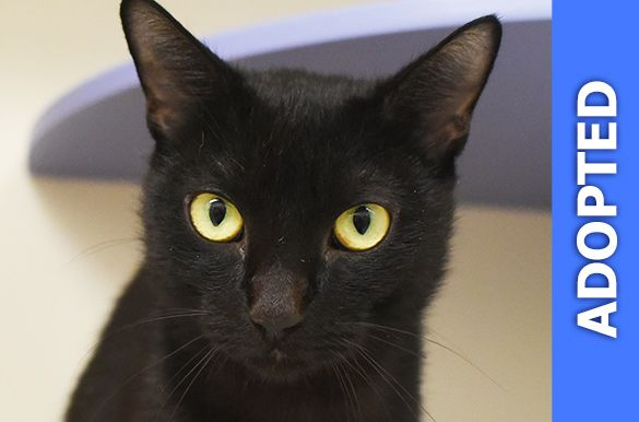 Lianna was adopted!