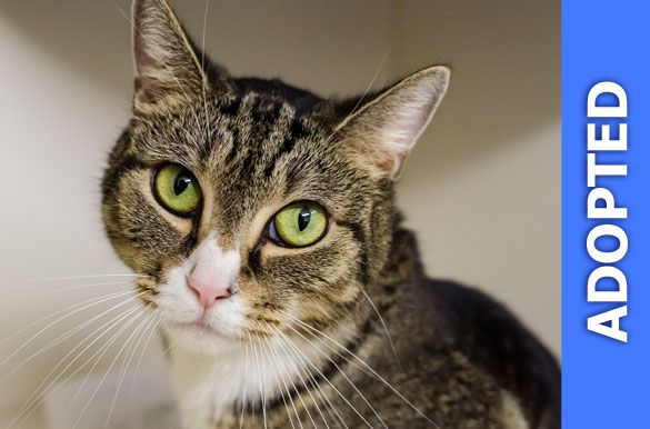 Lilly was adopted!