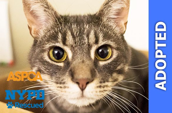 Lisbon was adopted!