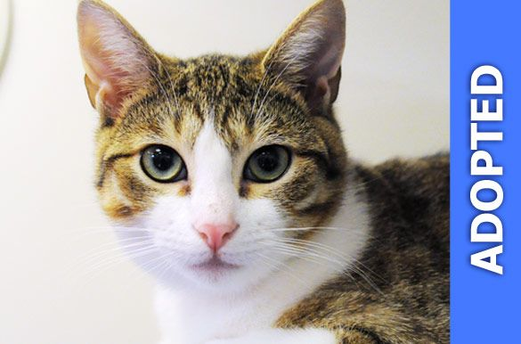 Lollipop was adopted!