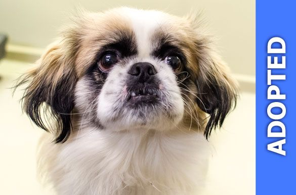 Lucky was adopted!