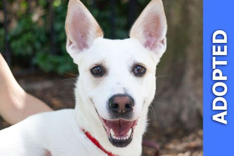 Maggie was adopted!