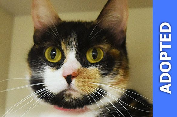 Marceline was adopted!