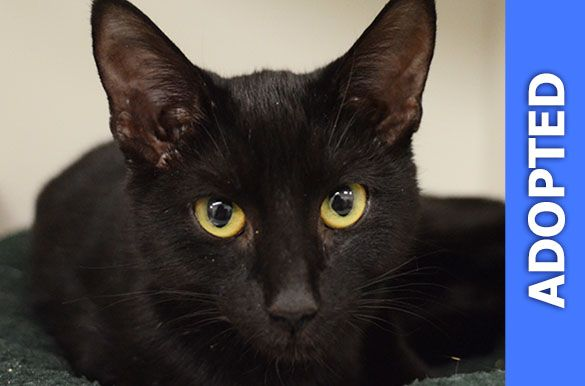 Marcia was adopted!