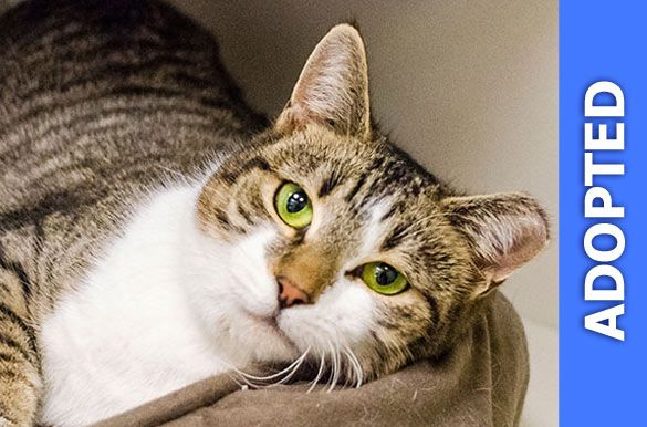 Marta was adopted!