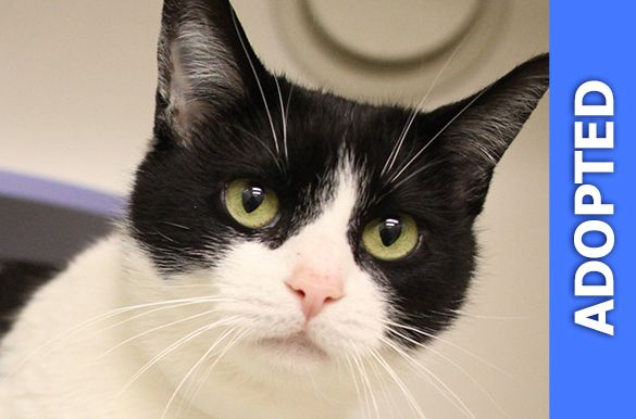 Martika was adopted!