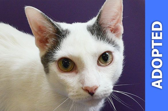 Marvelous was adopted!