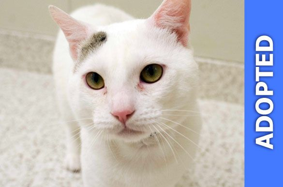 Marvin was adopted!