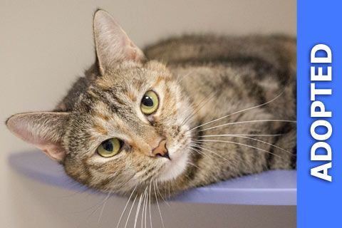 Mary Poppins was adopted!