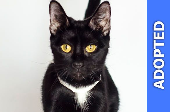 Matilda was adopted!