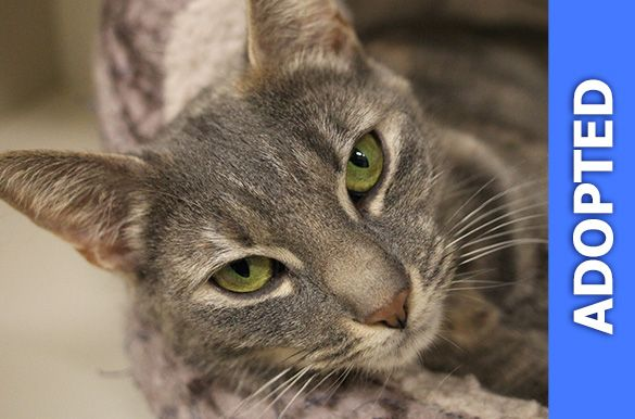 Michelle was adopted!