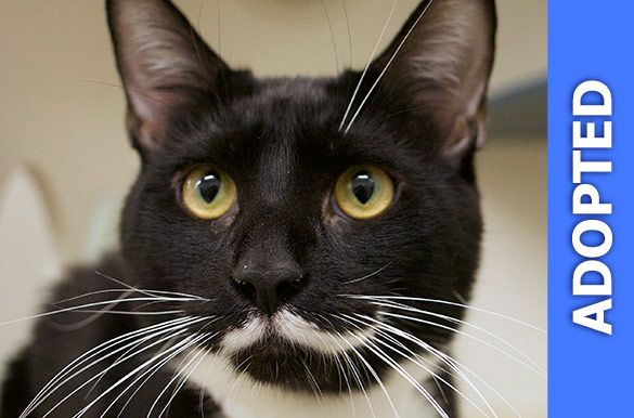 Mickey was adopted!
