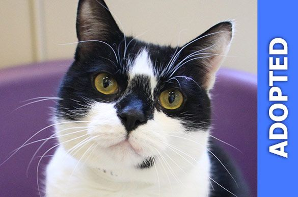 Milan was adopted!