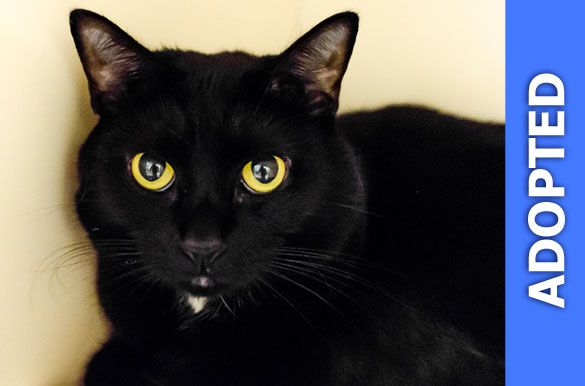 Mira was adopted!