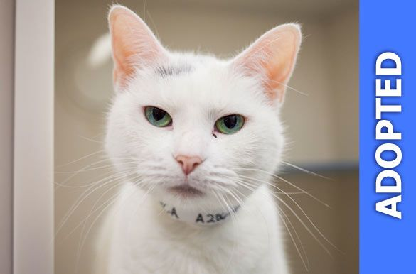 Miss Pearl was adopted!