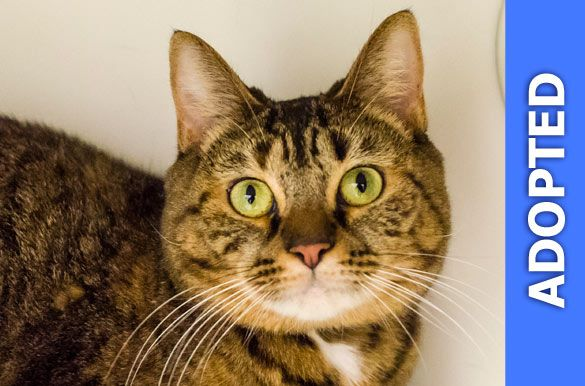 Mitchie was adopted!