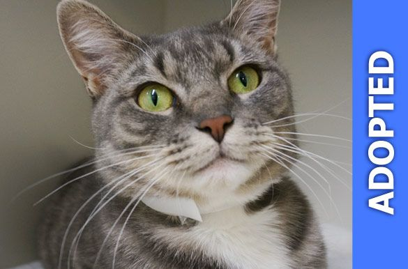 Mittens was adopted!