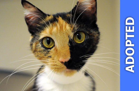 Moksha was adopted!
