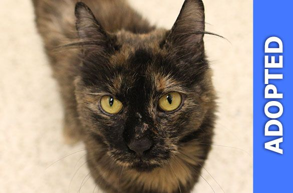 Mrs. Fluffenbottom was adopted!