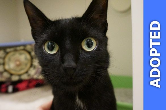 Muffin was adopted!