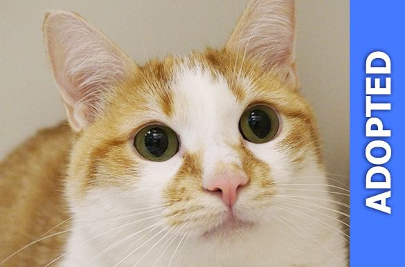 Munchkin was adopted!