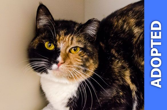 Naomi was adopted!