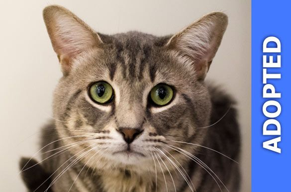 Nemo was adopted!