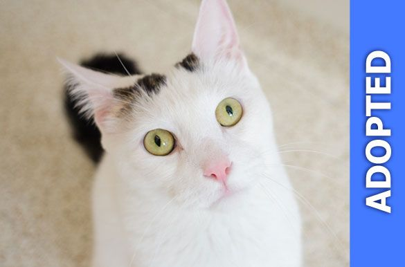 Noah was adopted!