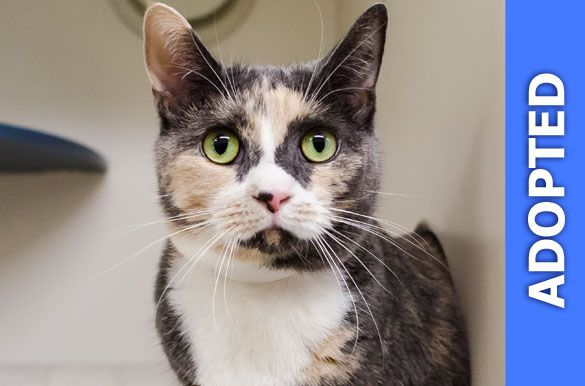 Nona was adopted!