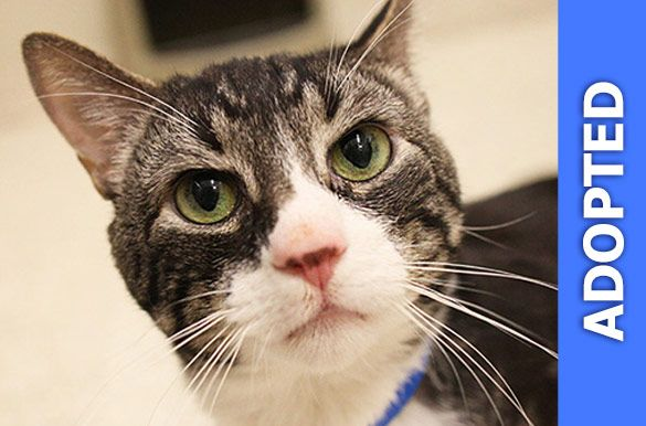 Norton was adopted!