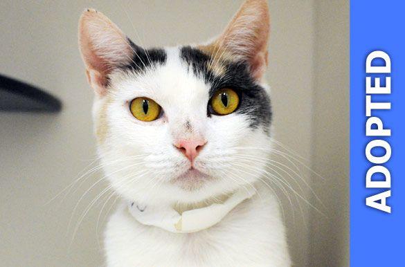 Olinda was adopted!