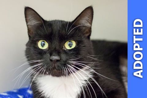 Ora was adopted!