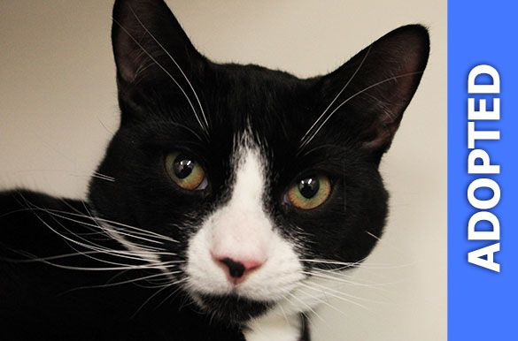 Orion was adopted!