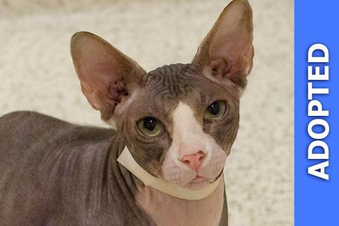 Paker was adopted!