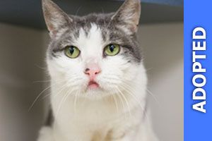 Pam was adopted!