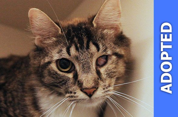 Patches was adopted!