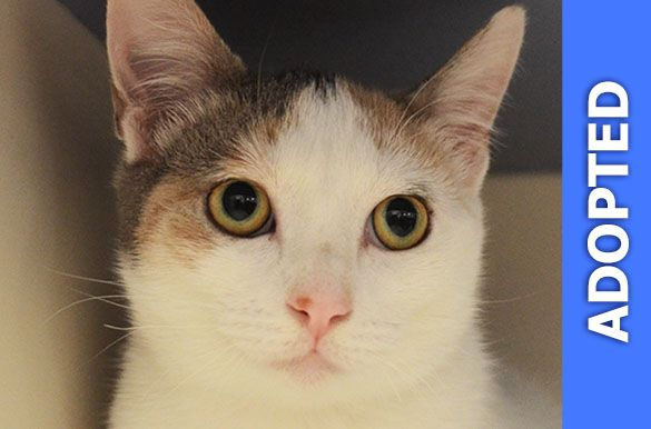 Peaches was adopted!