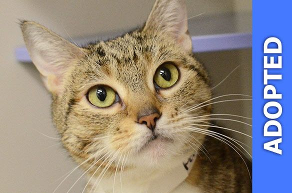 Pebbles was adopted!