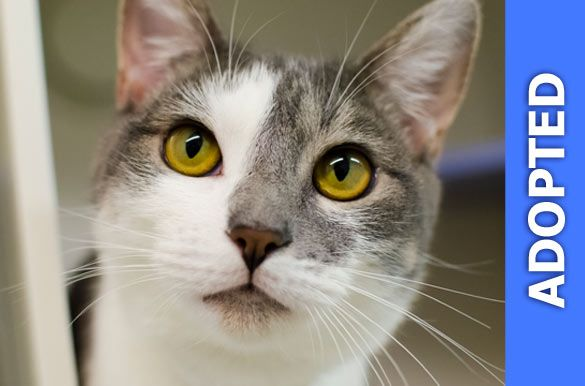 Pecan was adopted!
