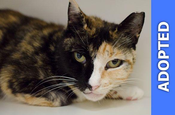 Pennsatucky was adopted!
