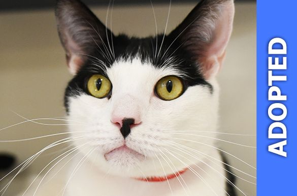 Penny Lane was adopted!