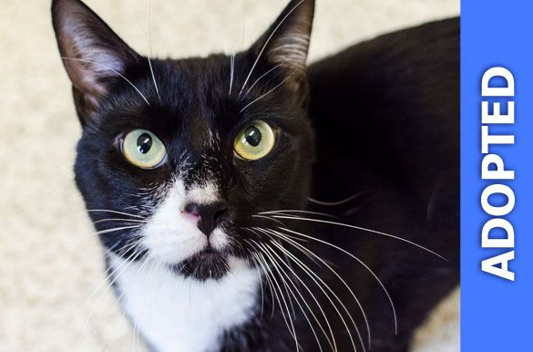 Pepe Le Pew was adopted!