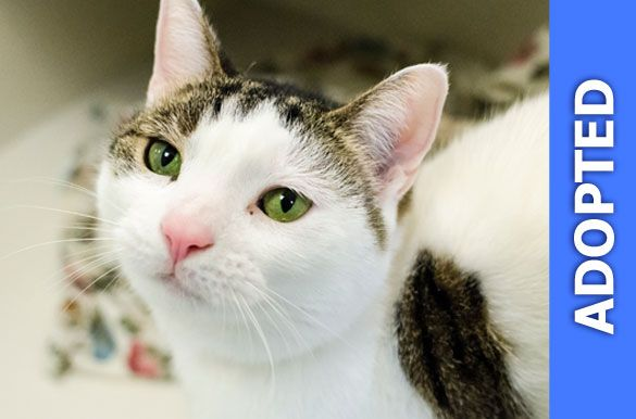 Peppermint was adopted!