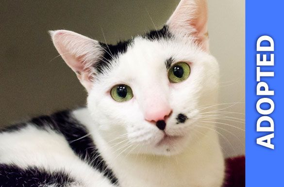 Peter Pan was adopted!
