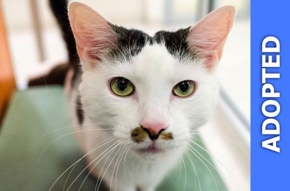 Petro was adopted!