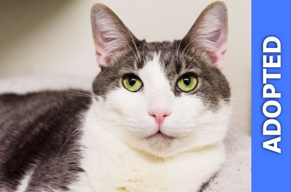Phillip was adopted!