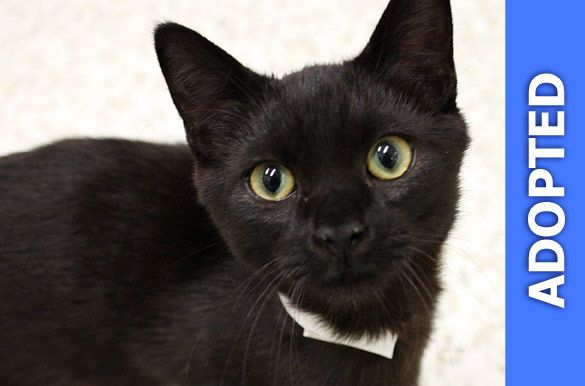 Professor was adopted!